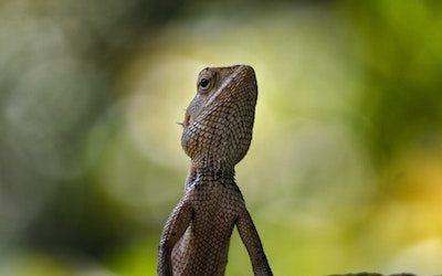 The Lizard Brain